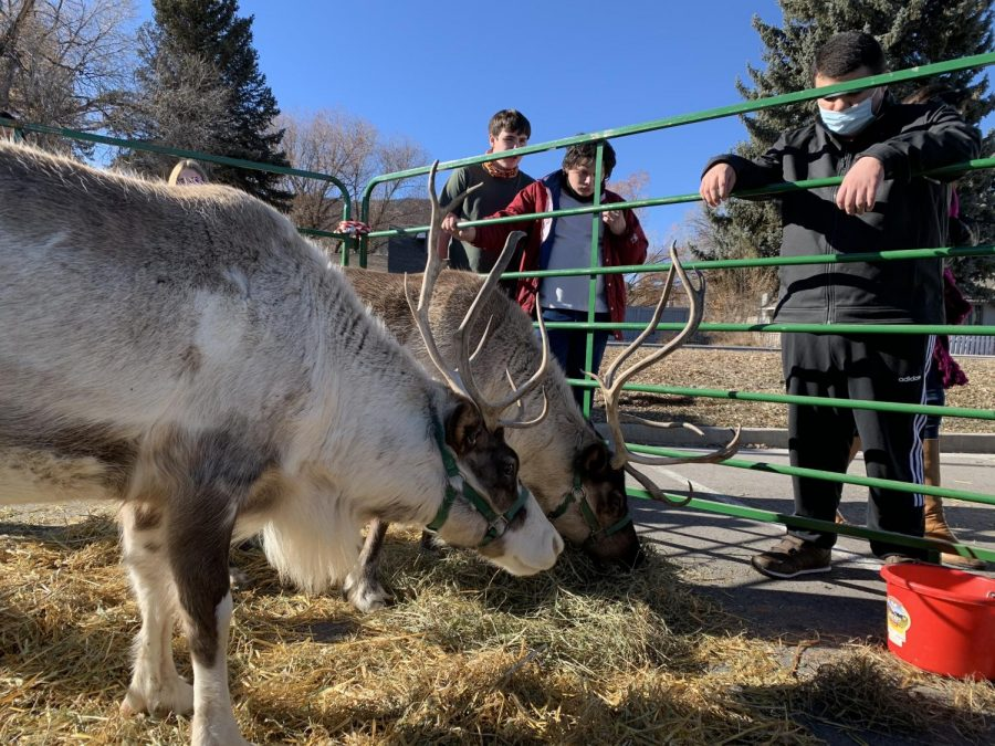Students gathered to observe the reindeer while Hannah Fritz from Noël Productions described what reindeer eat and their preferred climate.